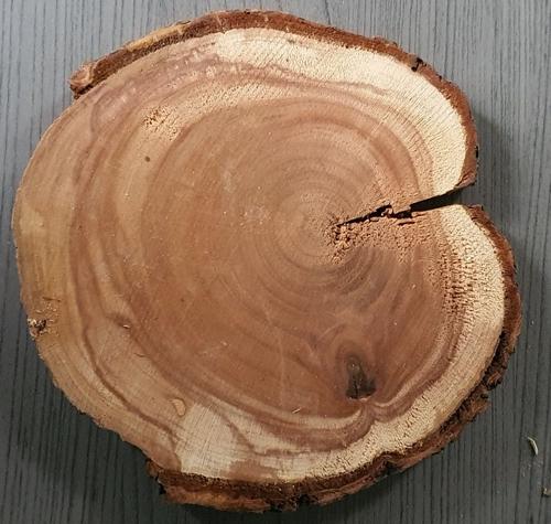 Boomstam onderzetter 15 cm doorsnee