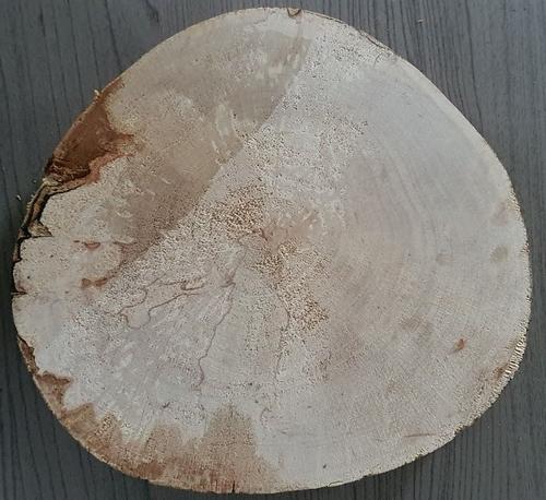 Boomstam onderzetter 17 cm doorsnee